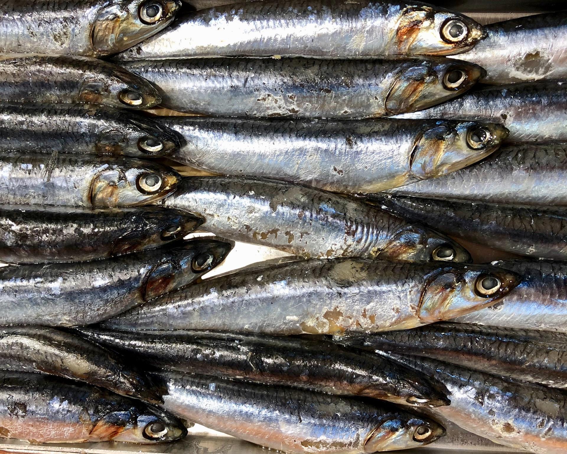 Hvad skal man lede efter i fiskeolie?